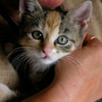 Domestic violence and pets